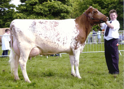 Marleycote Petal wins Champion Dairy Cow at the Northumberland Show 2005